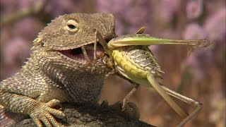 The Reptiles, Part4of4 Lizards (Nature Documentary, Full Length)