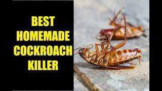 How to kill Cockroach with Boric Powder | Home made cockroach killer | Nisa Sayed's Kitchen
