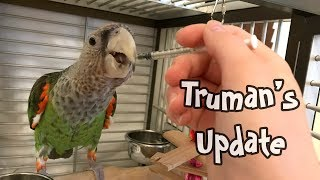 Truman Cape Parrot's Condition Detailed Health Update