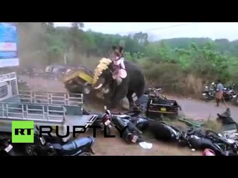Road Rampage: Elephant Goes Wild In India, Smashes Cars