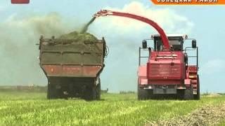 На полях Новгородской области началась заготовка кормов