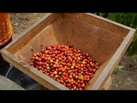 Why Is Sumatran Coffee So Special?