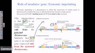 What is true about genomic imprinting