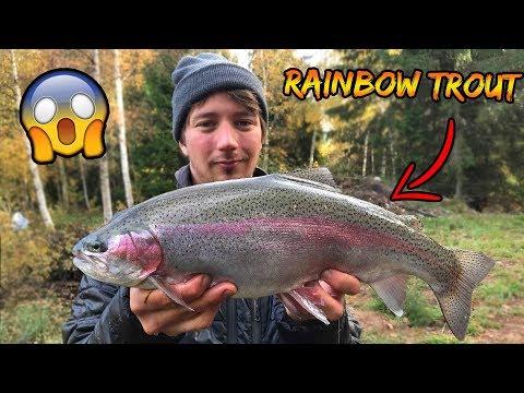 Regnbueørreder i en lille dam