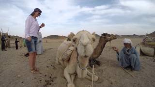 Egypt 2014, Oasis,Safari tour (Египет 2014, Оазис, Сафари)
