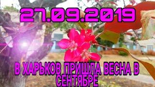 В Харькове зацвели яблони в конце сентября.  Сентябрь ты не май 😱😱😱