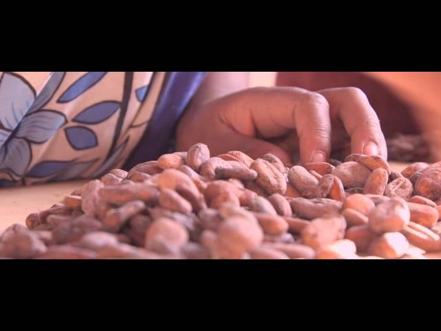 A la rencontre du cacao grand cru de Madagascar