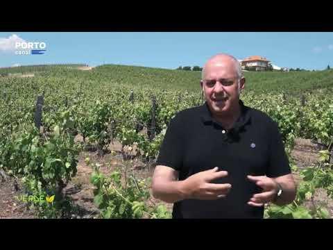 ADVID no Planeta Verde | Porto Canal - entrevista a José Manso, Presidente da Direção da ADVID