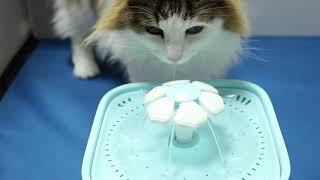 MOSPRO ペット給水器 犬 猫自動給水器の組み立て方【備忘録】