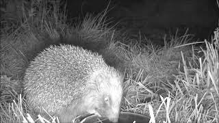 Wildlife Trail Camera - 22.4.2019
