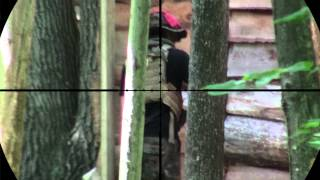 preview picture of video 'KJW M700P Sniper Scope Cam 5'