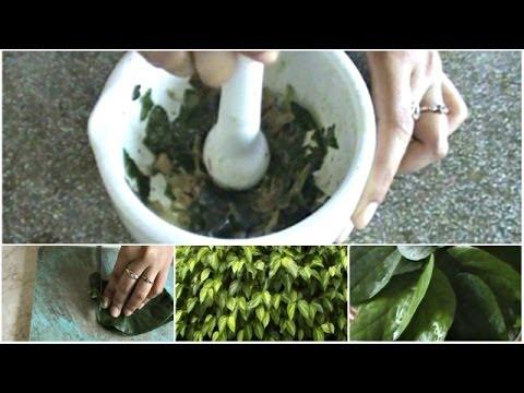 Video Obat Gusi Bengkak/Gusi Berdarah: Manfaat Daun Sirih sebagai Obat Herbal Radang Gusi
