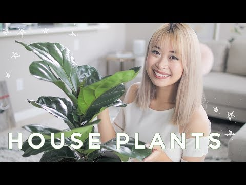 , title : 'Best Indoor Plants | Cute House Plants That Clean The Air 🌿