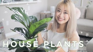 Best Indoor Plants   Cute House Plants That Clean The Air 🌿