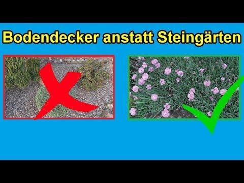 Bodendecker pflanzen statt Steingärten anlegen / Aus Liebe zur Natur lieber kein Schottergarten !!!
