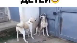 Видео Приколы Юмор Фэйлы Смех Ржака Fail Funny Vines 2241