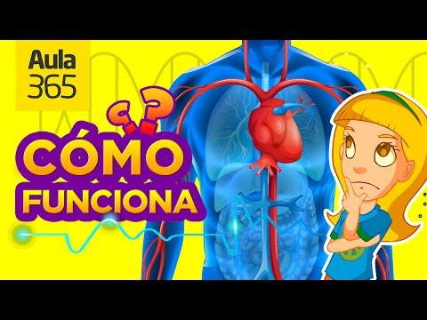 ¿Cómo funciona el Cuerpo Humano? | Videos Educativos para Niños