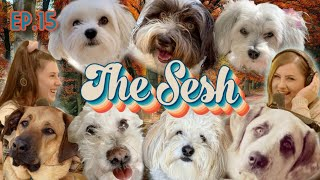 Hosting Our Own Dog Show & Drunk History: The Truth About Thanksgiving - EP.15