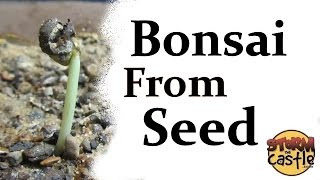 Starting a new batch of bonsai from seeds