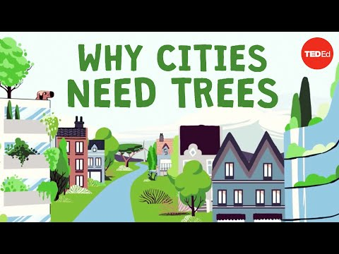 What happens if you cut down all of a city's trees? – Stefan Al