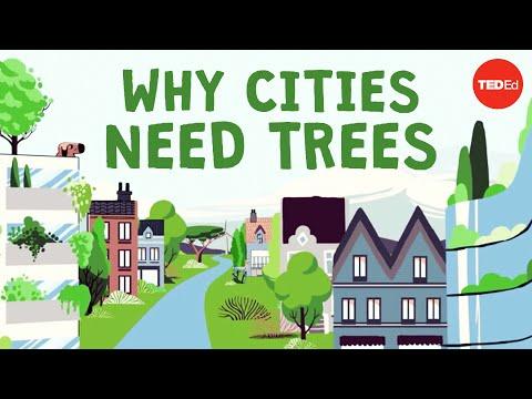סרטון הסבר: למה אסור לנו לוותר על עצים במרחב העירוני?