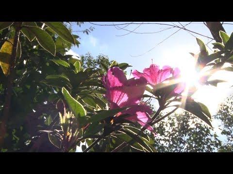 Projeto começa a revitalizar e florir jardins de Nova Friburgo