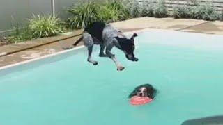 animale sarituri caini in piscina