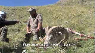 SHEEP of the Old World - Hunting (Chasse) ARGALIS - Part 2 by Seladang