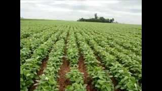 Технологія і організація робіт з виробництва сої