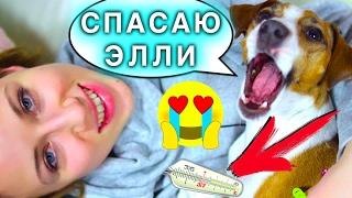 МОЯ СОБАКА МЕНЯ ЛЕЧИТ!!! - Я БОЛЕЮ ОТРАВИЛАСЬ ЕДОЙ - РЕАКЦИЯ СОБАКИ ДЖИНЫ   Elli Di Pets