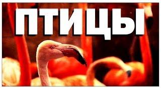 Галилео. Зоопарк. Птицы