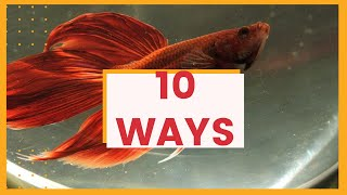 10 ways to tell if a betta fish is dying - Betta fish informational video
