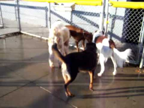 Terrific Tuesday  – 12/1/09 at Central Bark Doggy Day Care Oswego, IL