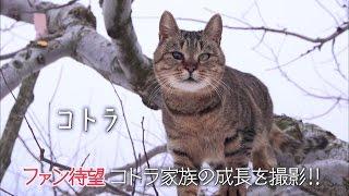 猫づくしの至福の時間がここに!NHKBSプレミアの人気番組『岩合光昭の世界ネコ歩き』、劇場版公開決定