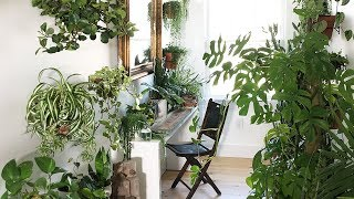 Plant Styling Secrets:  Small Spaces!