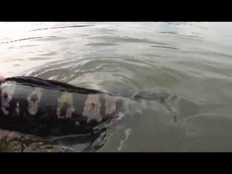 Hồ xuân hương Đà Lạt xuất hiện thủy quái