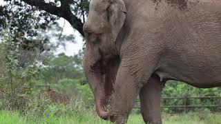 Mara llegó al Santuario de Elefantes