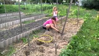 Семья Бровченко. Как бороться с личинкой хруща, как она выглядит и как вредит на огороде.