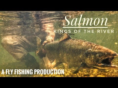 Pere Marquette King Salmon Fishing Michigan 2017!