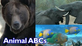 Animal ABC Song for Kids | Cute Animals | Funny Animals | Kinder Playtime
