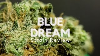 Blue Dream Cannabis Strain Review  ISMOKE