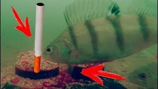 Аромат прикормок для рыбы
