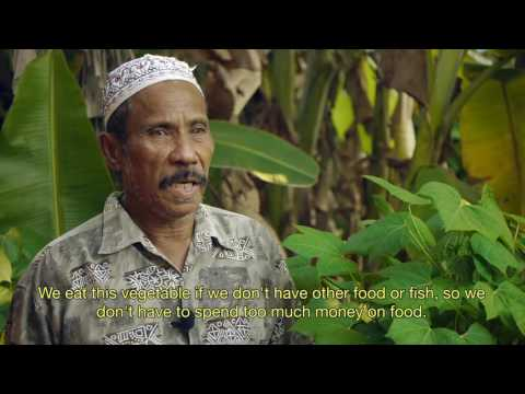 Video Daun Chaya dikonsumsi oleh warga di pulau Sumba