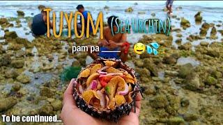 Manuyom ta bai!   How to get Sea Urchin   Tuyom sa Oslob Cebu!   Yummy!