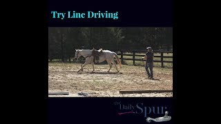 How To Teach Your Horse To Line Drive With Free Printable Checklist