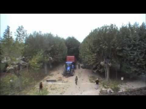 Vidéo accélérée de l'élagage des platanes à Tréclun