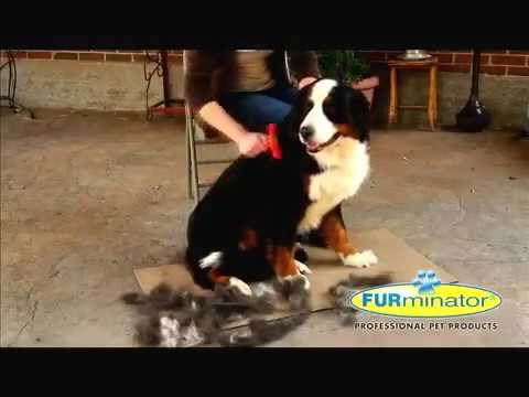 FURminator, come funziona e per quali cani e gatti è adatto