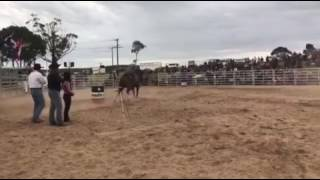 Keatley Cowgirl - Tammy Woodall - rides at Dartmoor Rodeo