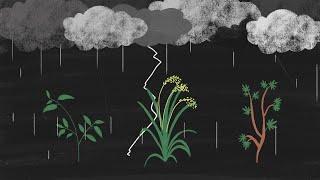 Monopolrechte auf Saatgut: Wie die Schweiz den Hunger fördert