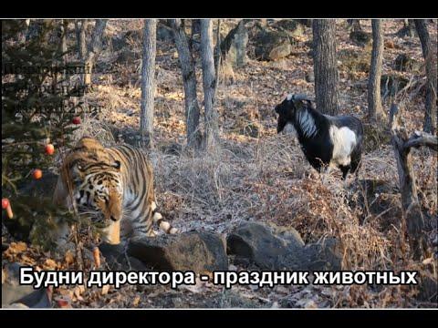 Будни директора- праздник животных